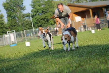 Spielwiese Hunde